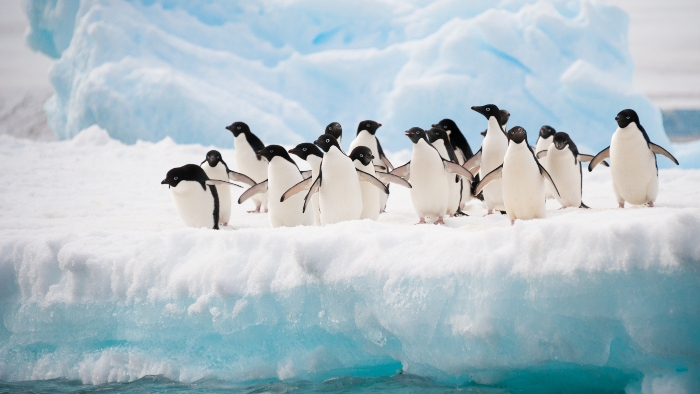 Top Antarctica Cruise Ships Excursions