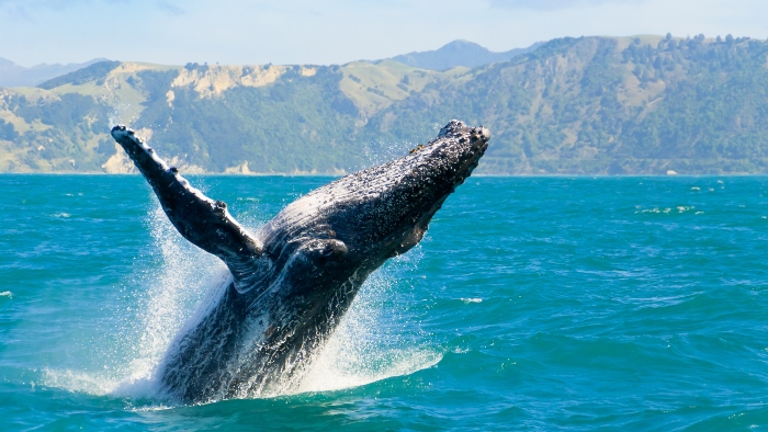 azores whale watching cruise