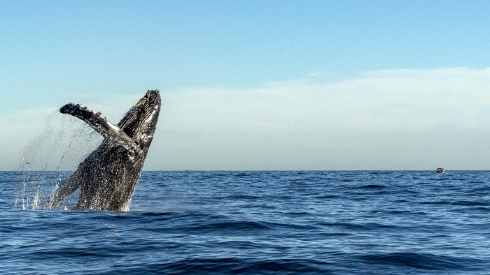california whale watching cruise