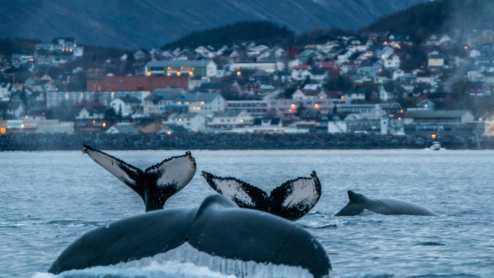 norway whale watching cruise